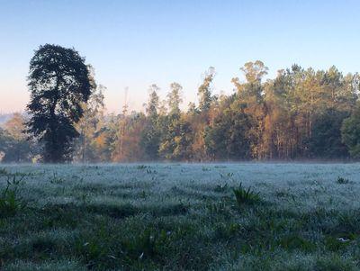 Dewey fields